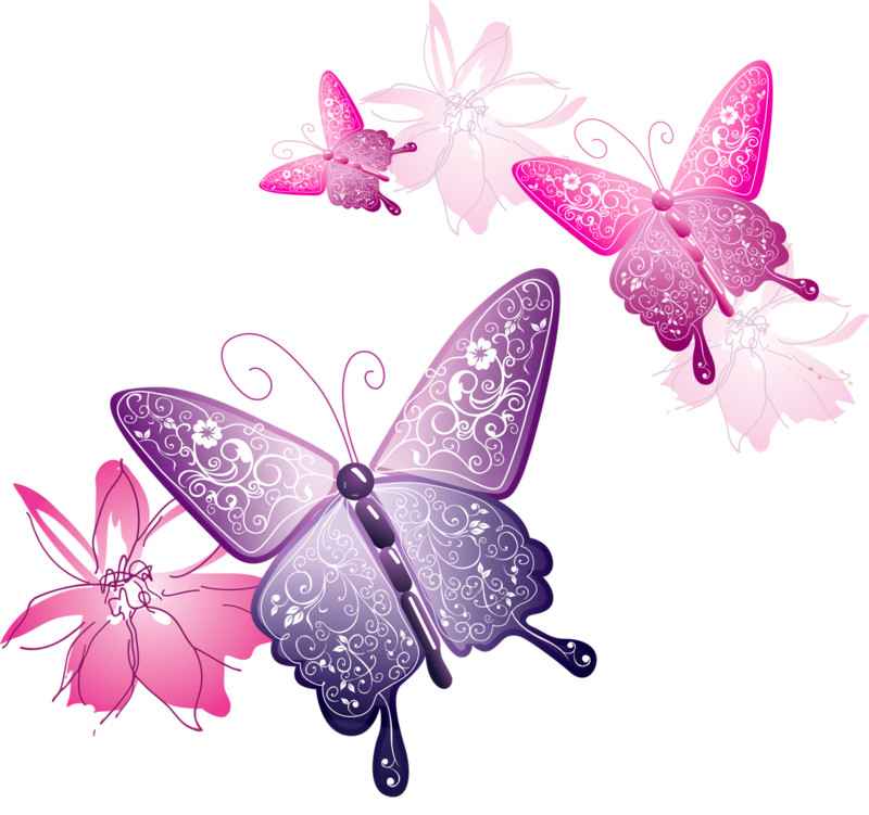 Vector butterflies. Download free png butterfly
