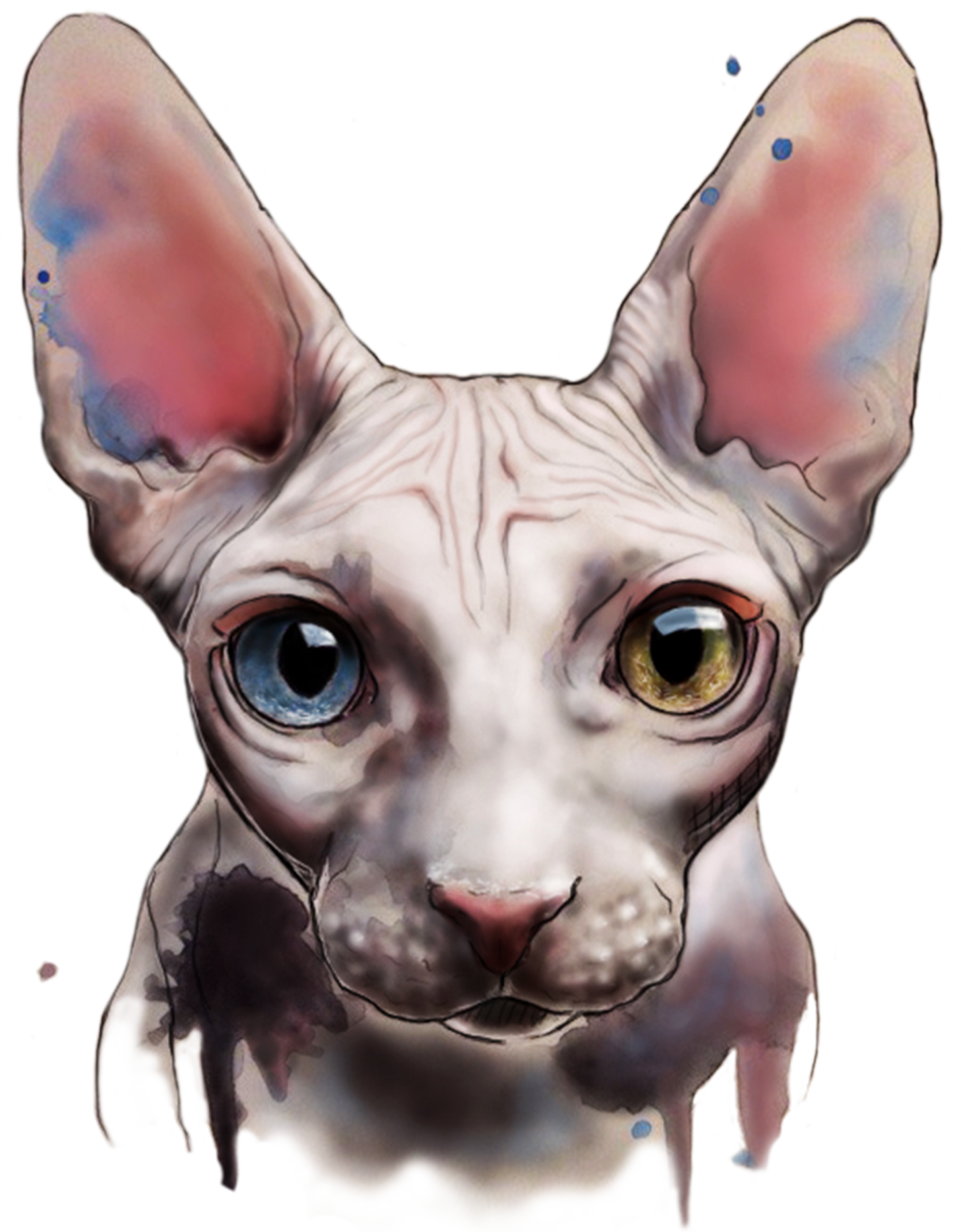 kitty transparent hairless