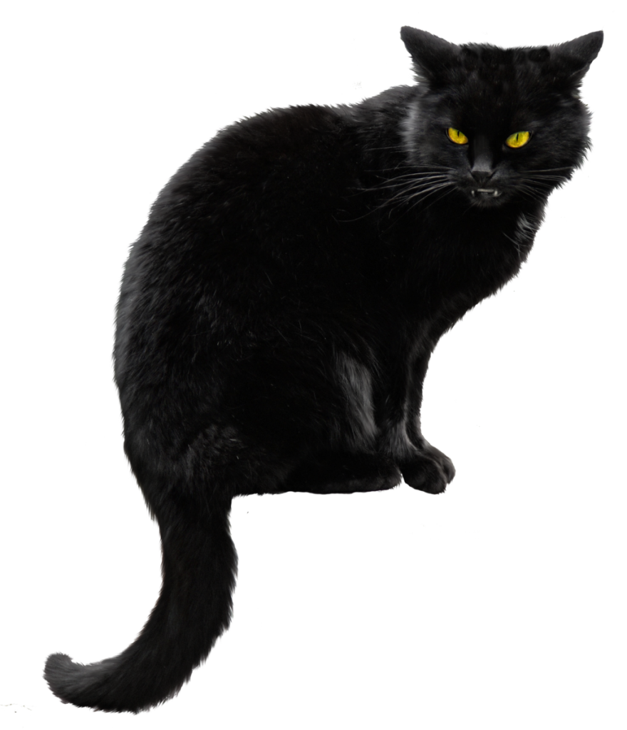 Vector cats file. Black cat png peoplepng