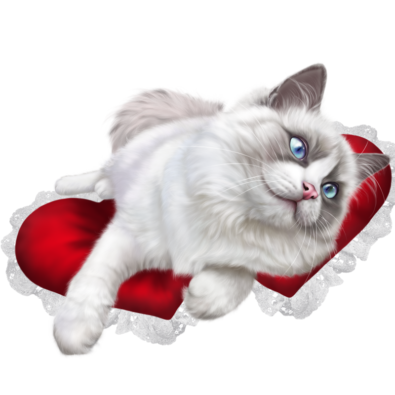 Vector cats ragdoll cat. Forgetmenot animals pinterest and