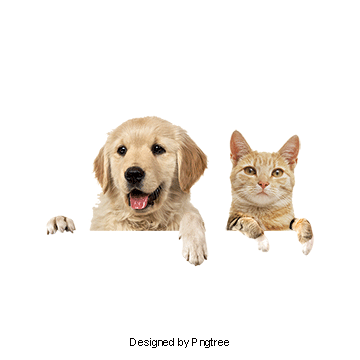 Cats and dogs png. Dog cat vectors psd