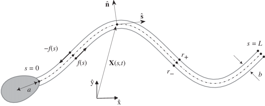 Vector curve frame. A schematic of the
