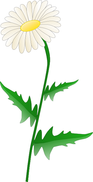 Vector daisy. Tatoo outline of flower