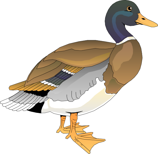 Vector duck clipart. Wood black and