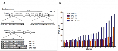 Vector expressions bacterial expression. Recombinant protein production ludwig