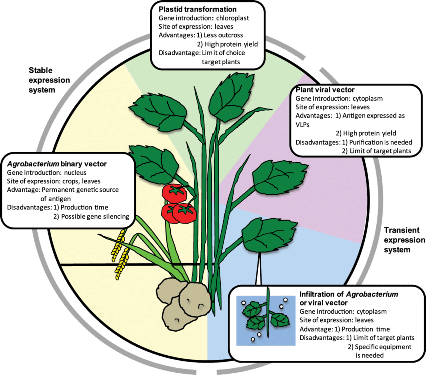 Vector expressions plant virus. Transgenic technologies and their