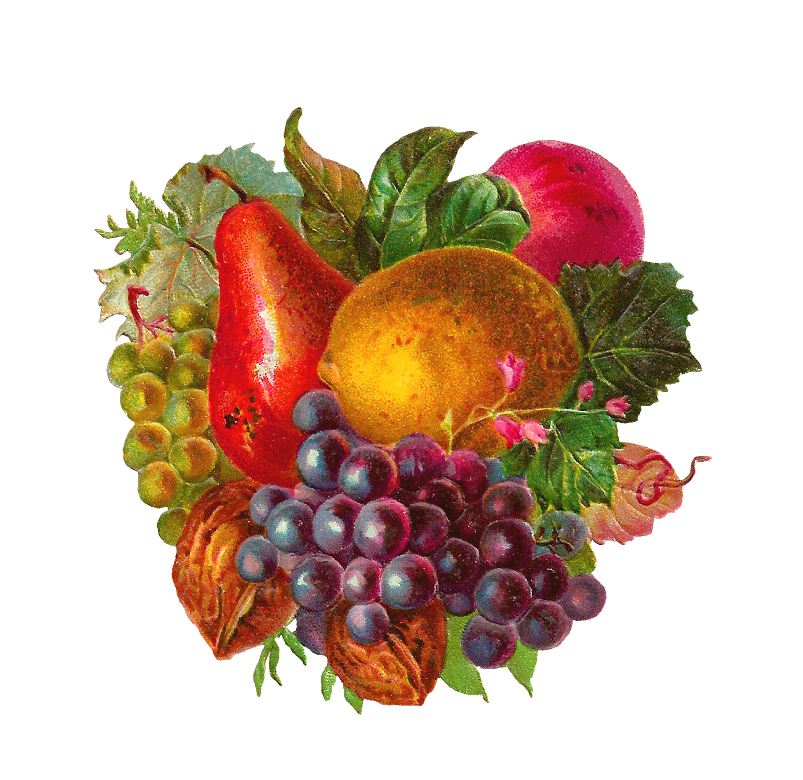 Vector fruits banner. Fruit mix clipart clipground