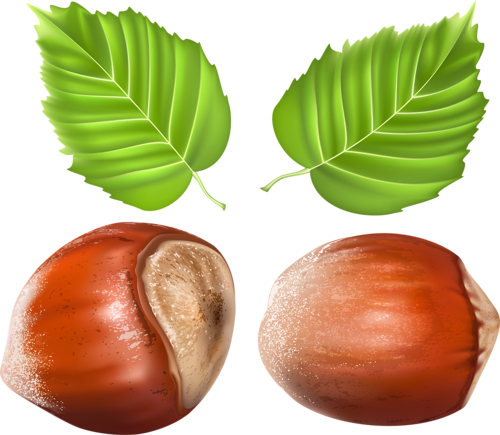 Vector vegetables realistic. Fruits herbs and nuts