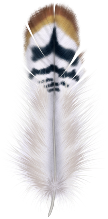 Fur vector bird feather. Tubes plumes feathers pinterest