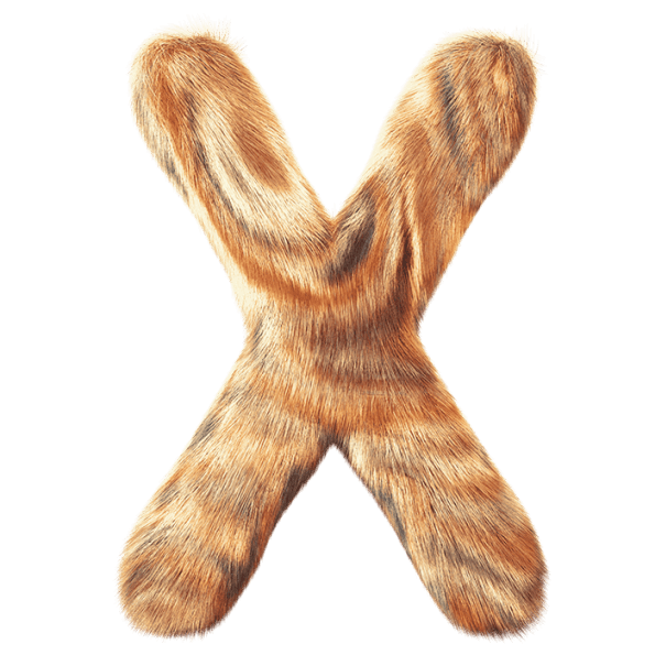 Vector fur fuzzy. Express your love for