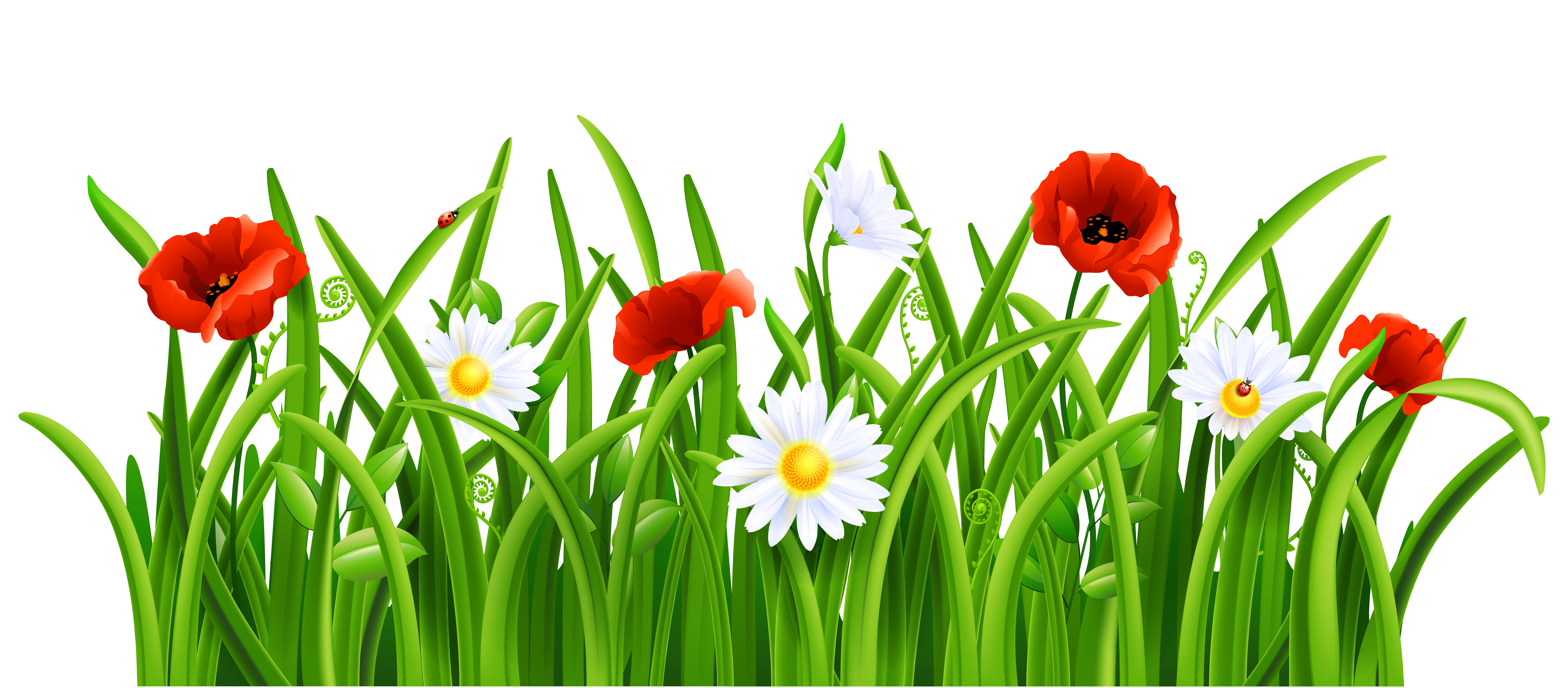 Vector grass png. Free clipart psd peoplepng