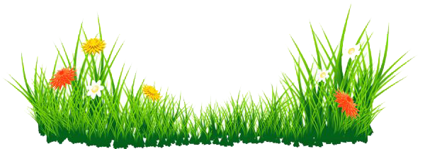Vector grass png. Portable network graphics pluspng