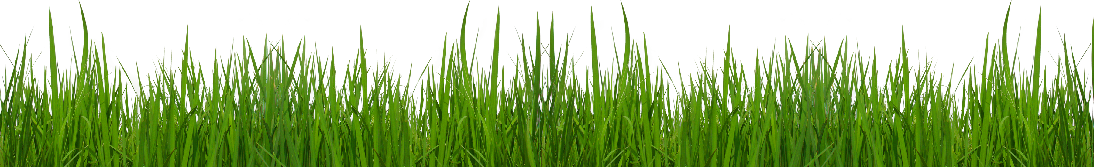 Vector grass png. Collection of free