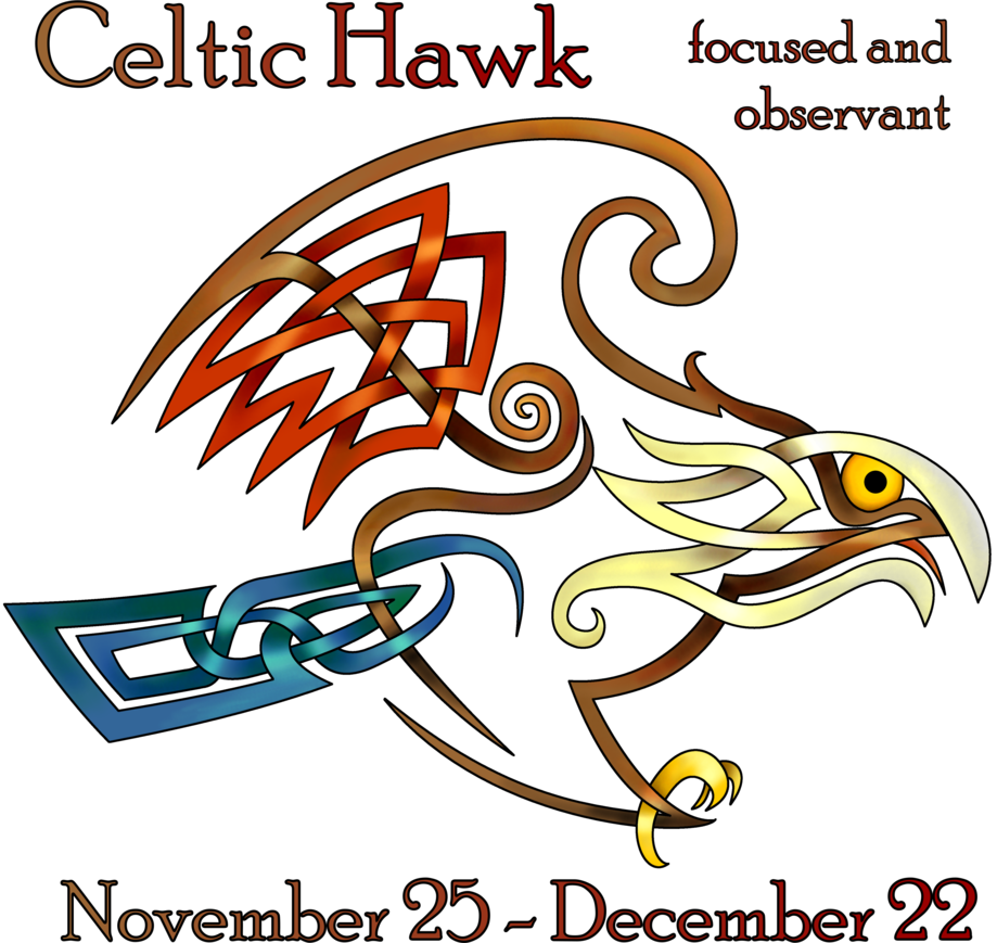 Hawk by knotyourworld on. Vector hawks celtic image transparent library