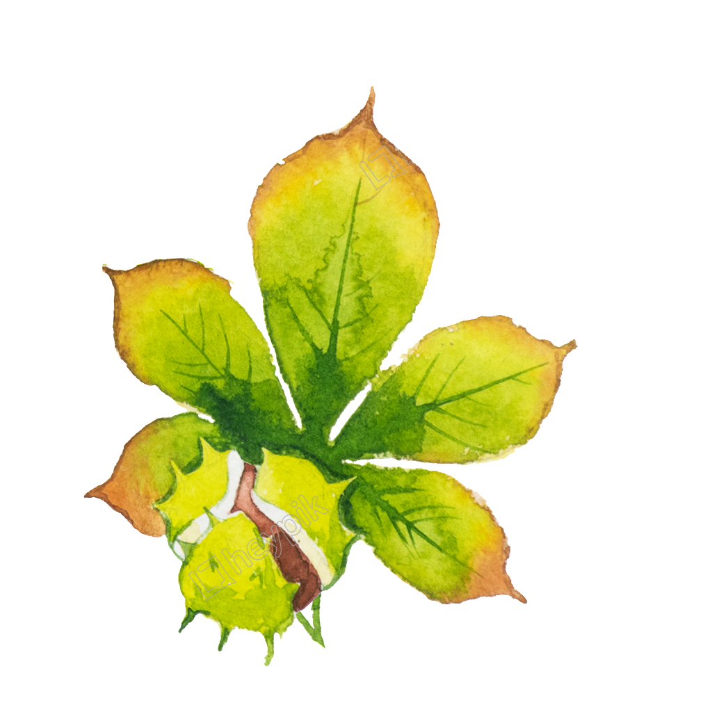 Vector hd leaf. Handpainted green beautiful png