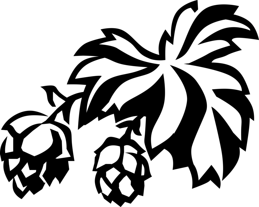Flavoring and stability agent. Vector hops svg transparent