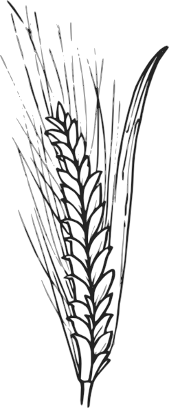 Vector hops wheat. Outline of google search
