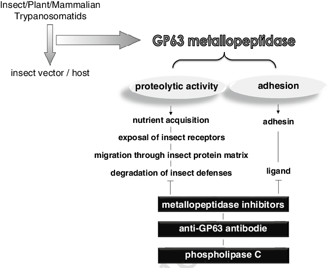 Vector host interaction. Possible roles played by