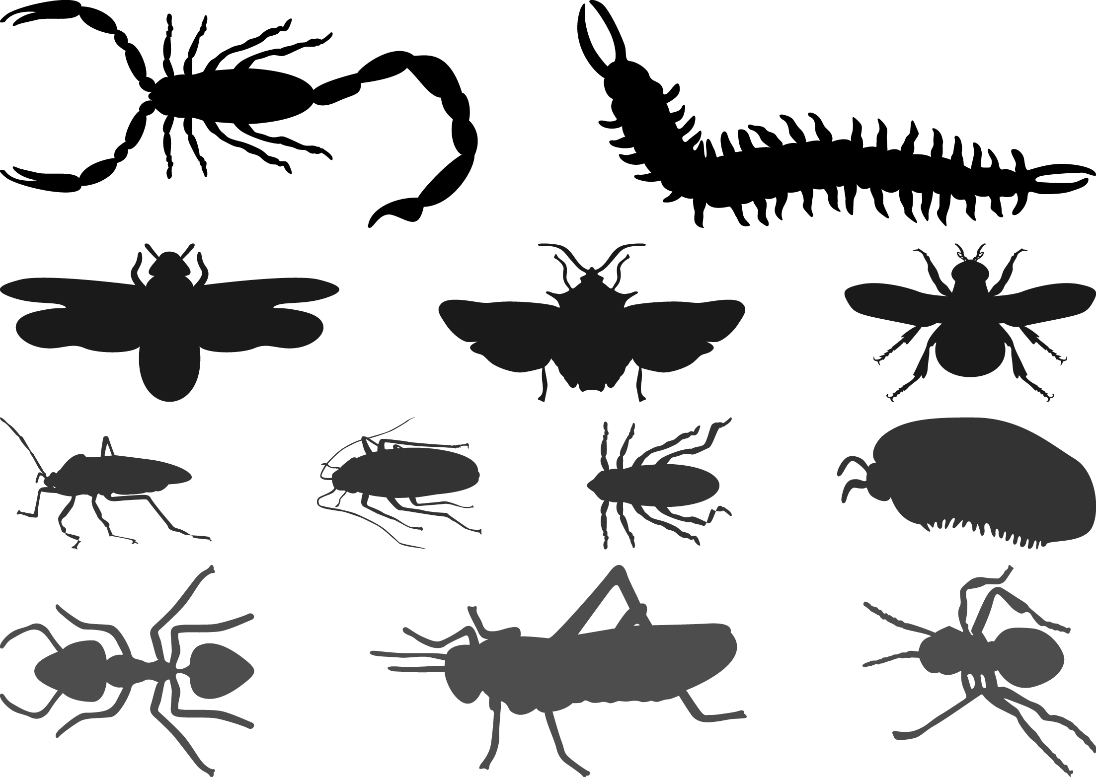 Vector insects. Beetle cockroach silhouette butterfly