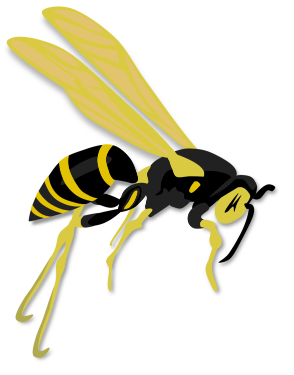Hornet western honey bee. Wasp vector clipart image free library