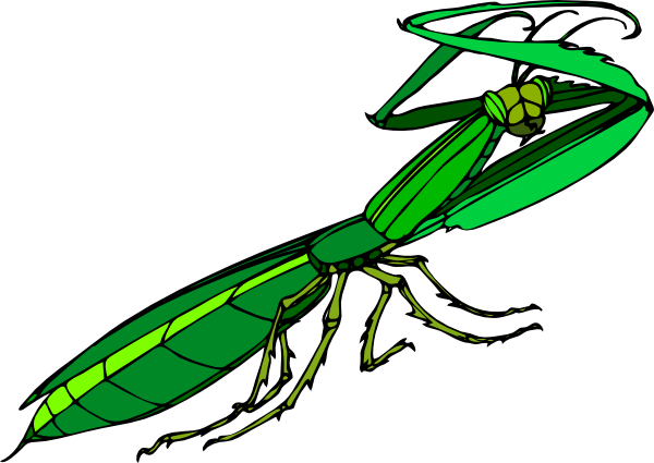 Vector insects praying mantis. Cartoon clip art at