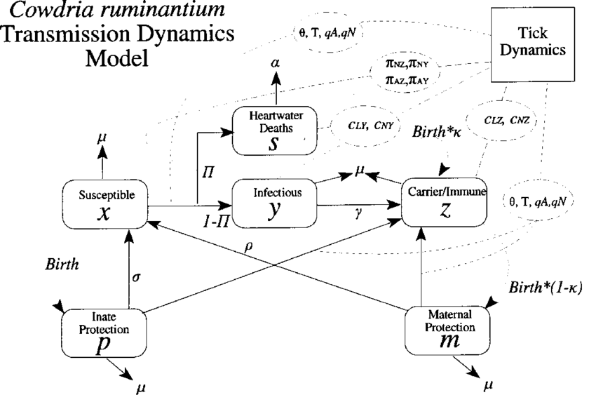 Vector means transmission. Schematic representation of a