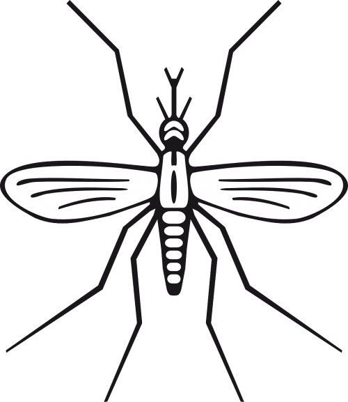 Vector mosquitoes carries malaria. Free photos search download