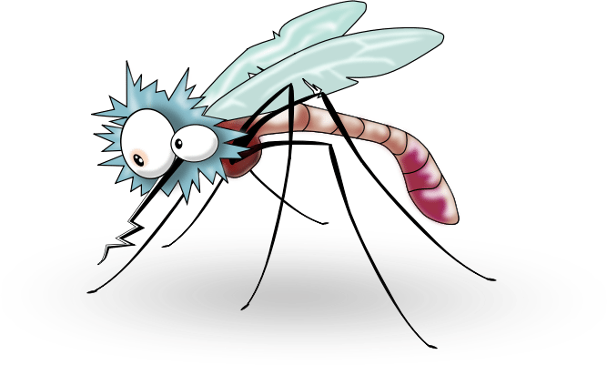 Vector mosquitoes gnat. Mosquito control household insect