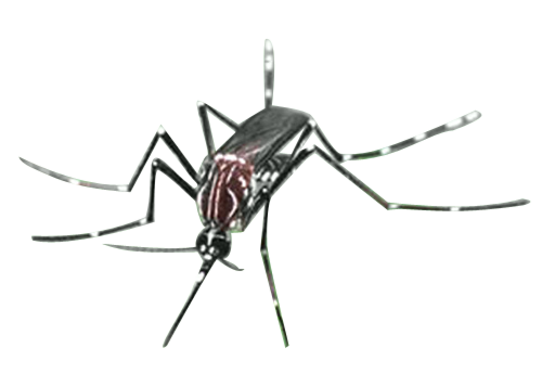 vector mosquitoes mansonia