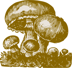 Vector mushroom food. Mushrooms clip art at