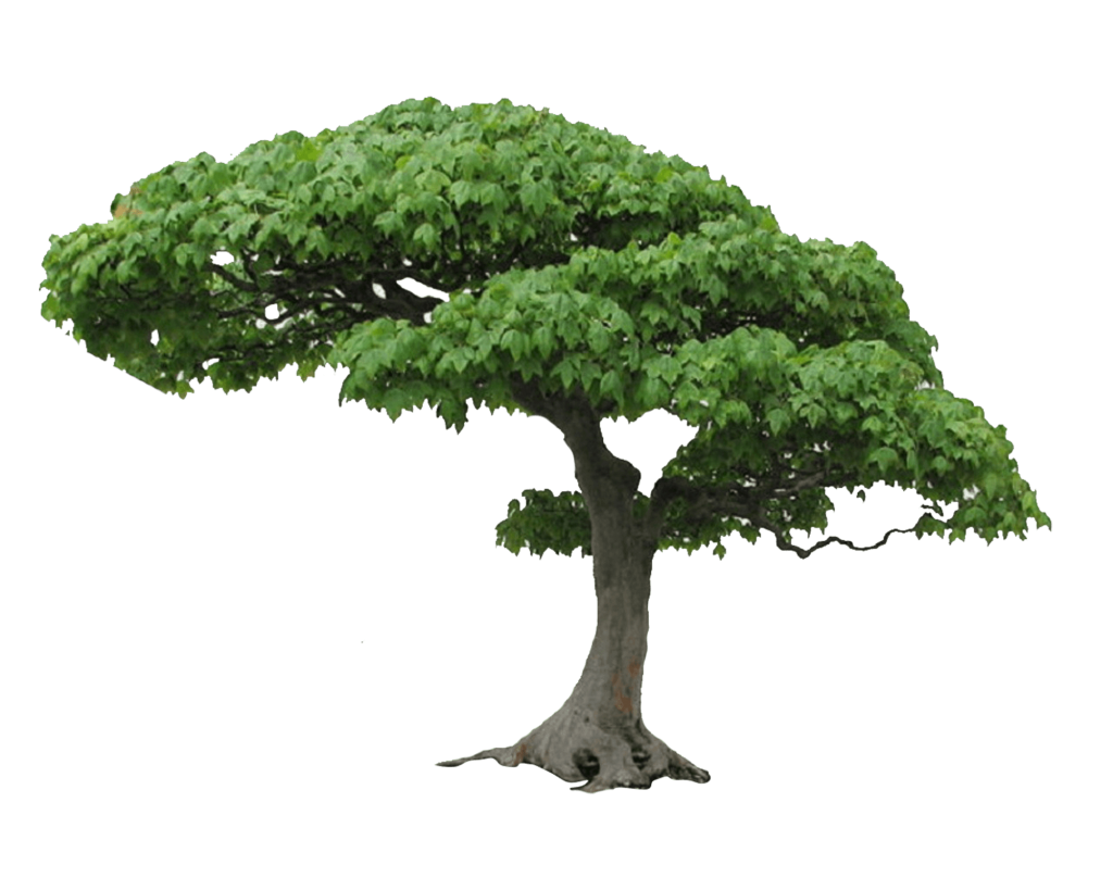 Vector nature tree. Png picture clipart psd
