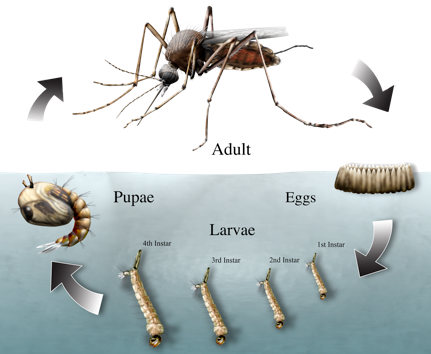 Vector organism. Northwest mosquito and control banner royalty free library