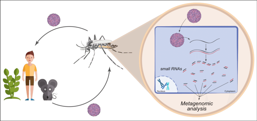 Vector organism multicellular. Insects are major reservoirs
