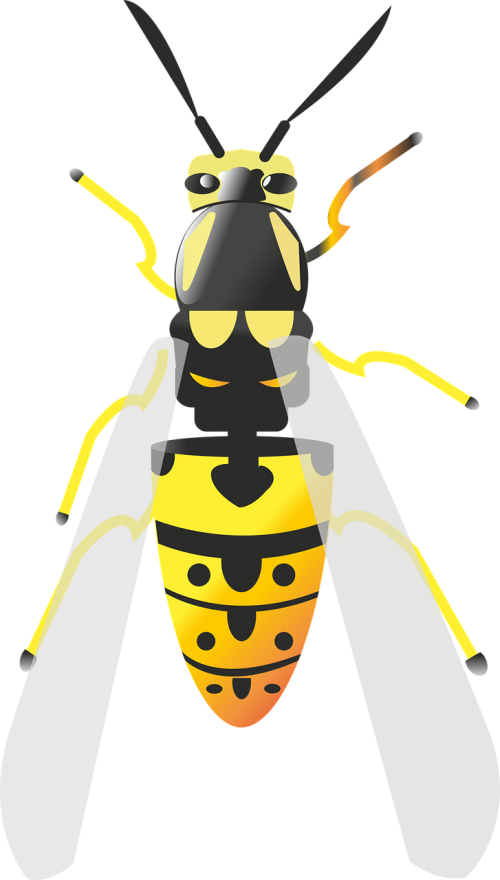 Free photos bee search. Vector parasite insect clip art library