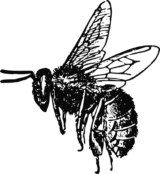 Vector outline bee. Drawing clip art at