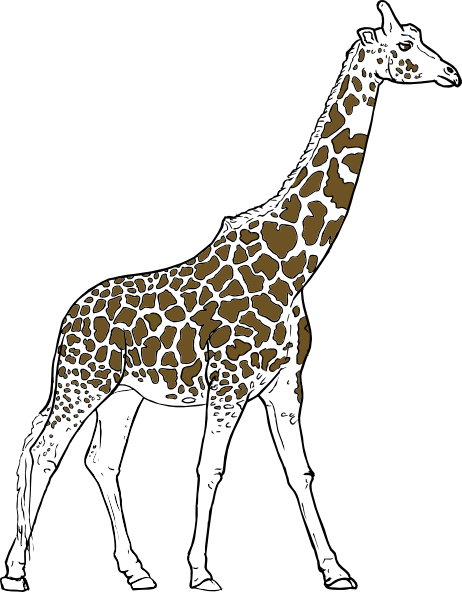 Drawing kangaroo wild animal. Giraff outline clip art