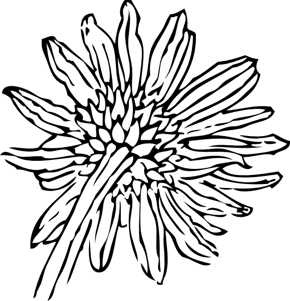 Drawing sunflowers small. Back of a sunflower