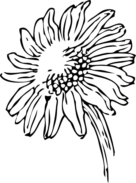 Vector outline sunflower. Tatoo of daisy flower