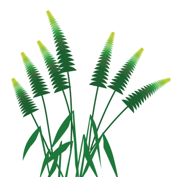 Vector palm tree png. Graffiti forest material trees