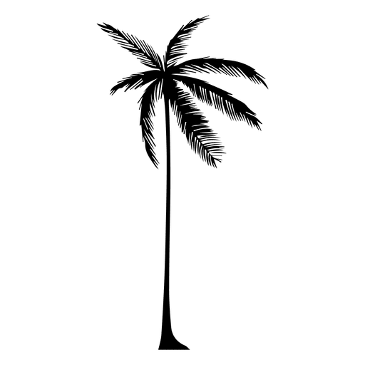 Vector palm tree png. Silhouette of a transparent