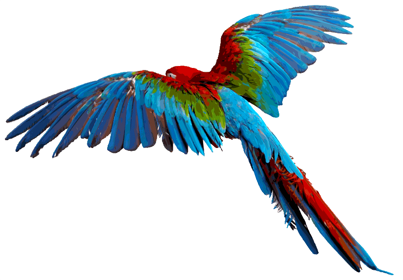 Vector parrot blue gold macaw. Scarlet with his wings