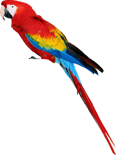 Vector parrot blue gold macaw. Lorikeet png dlpng colorful