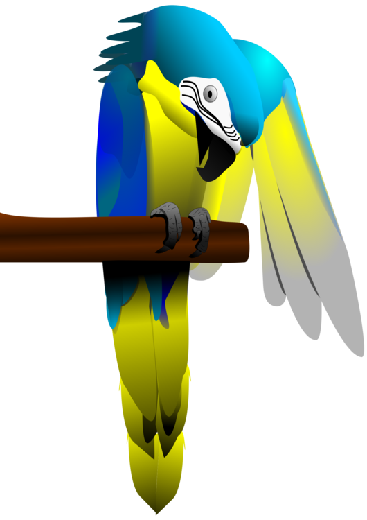 Vector parrot blue gold macaw. And yellow bird budgerigar