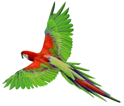 Vector parrot jungle. Png dlpng