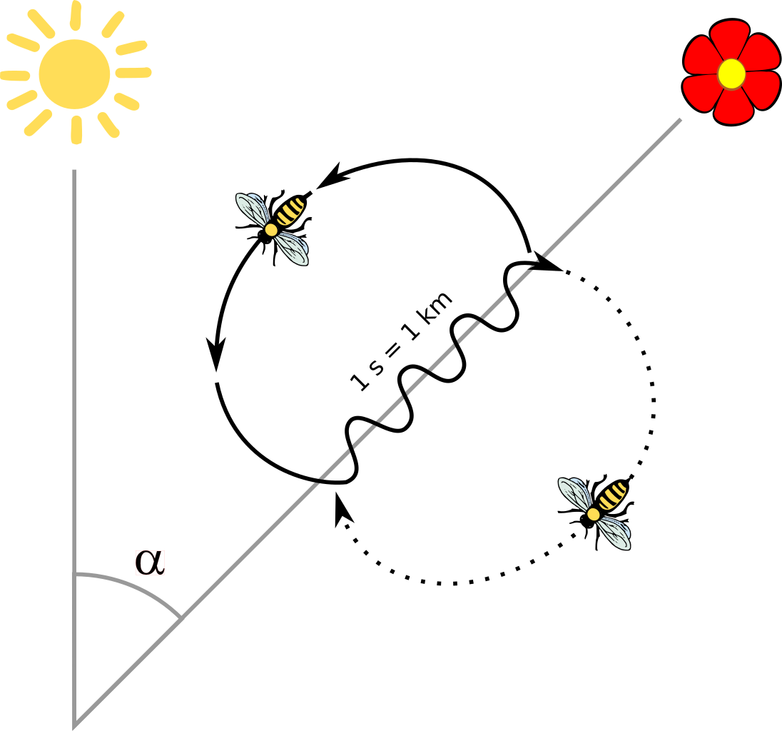 Vector path bee. The mystery finding food