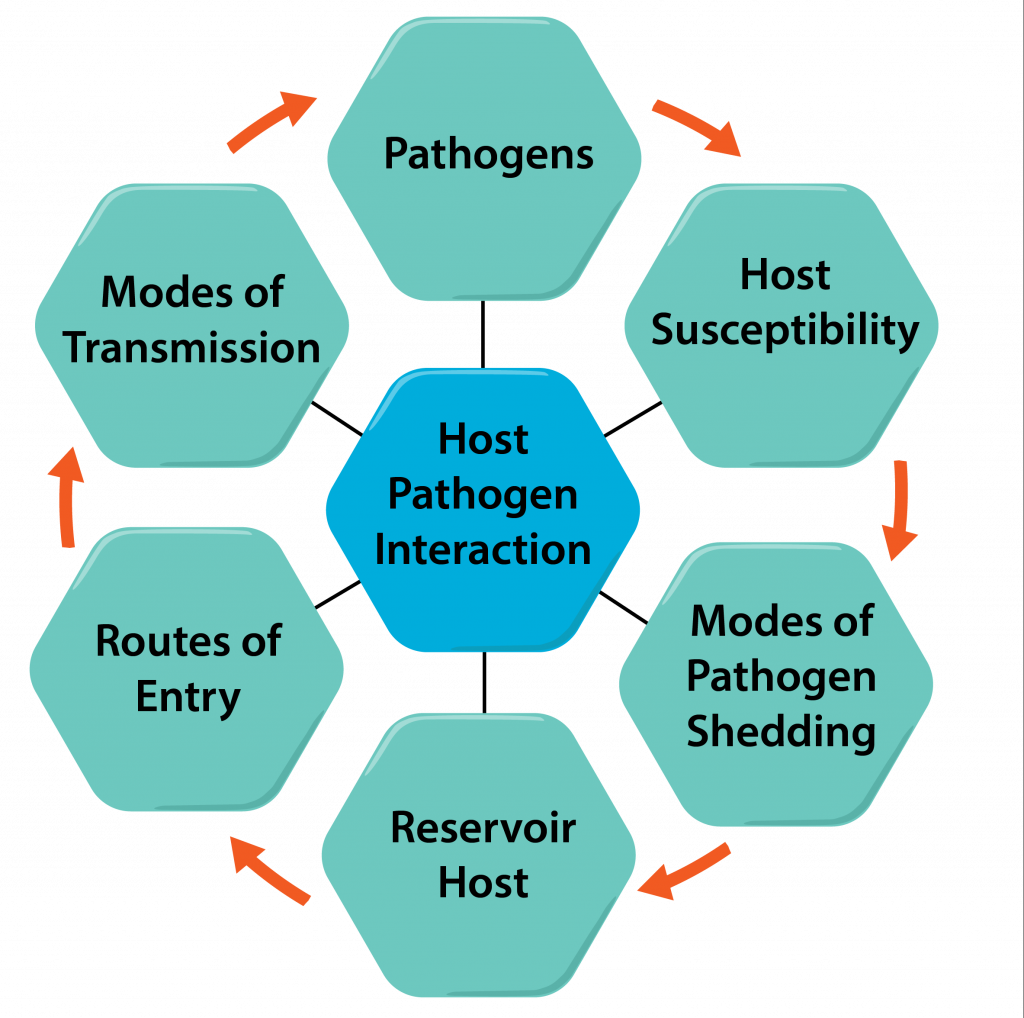 Vector pathogen. Bacterial pathogenicity microbiology hostpathogen