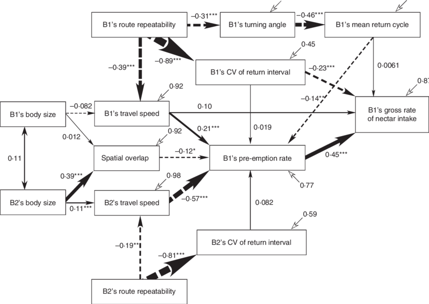 Vector paths bee. Path diagram for determinants
