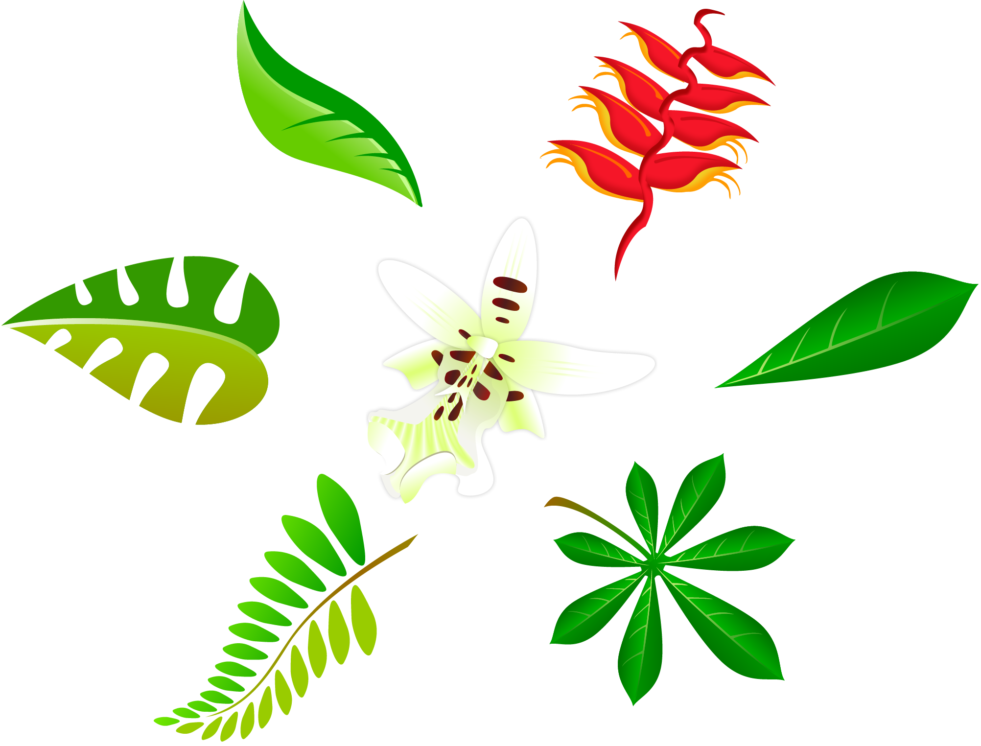 Leave vector plant. Best leaves images