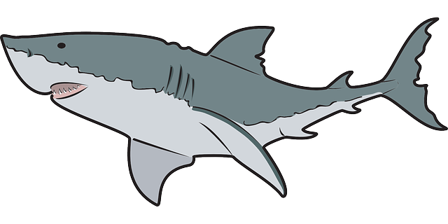 baby shark clipart clear background