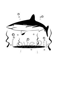 Vector sharks coloured. Photo photography pictures shark
